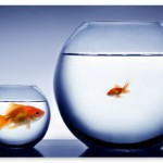 10 Actions Points for your Business to be the Big Fish in your Real Estate Market?